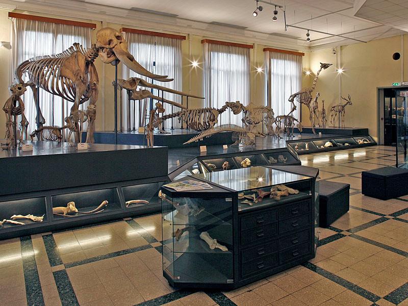 roma_museo_civico_di_zoologia