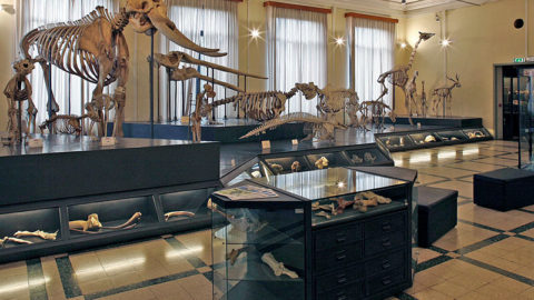Civic Museum of Zoology