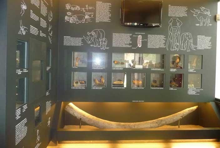 Museo-Casal-de-Pazzi
