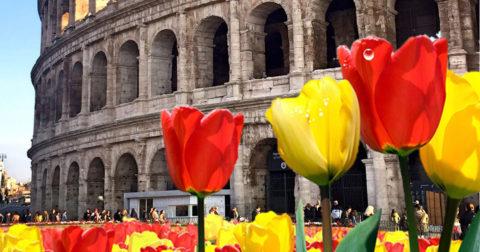 Tulipark, il parco di tulipani per la seconda volta nella Capitale
